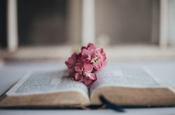 pink flowers on book page